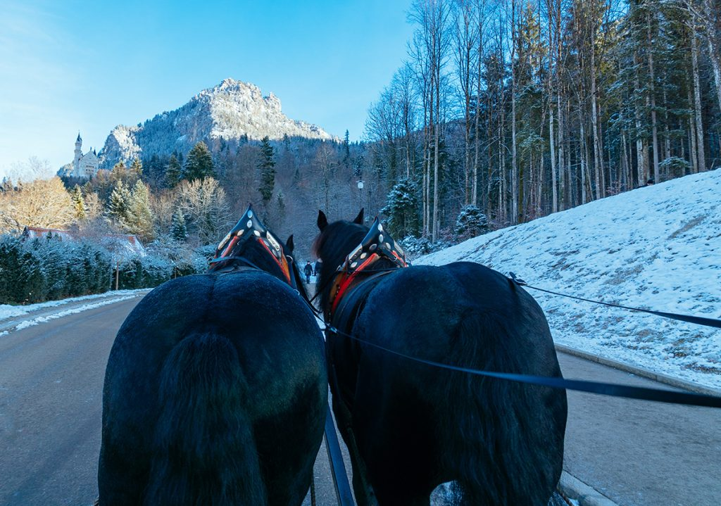 Taking the horse carriage up to Neuschwanstein castle